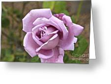 Pink Rose In Israel Greeting Card