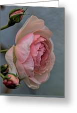 Pink Rose Greeting Card by Leif Sohlman