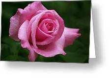 Pink Rose Perfection Greeting Card by Rona Black
