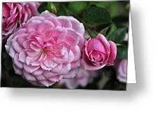 Pink Rose Petals Greeting Card
