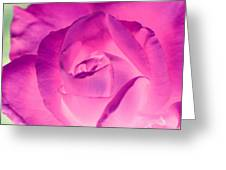 Pink Rose - Photopower 1790 Greeting Card