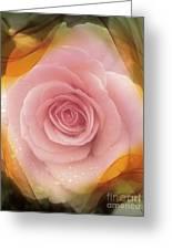 Pink Rose Romance  Greeting Card