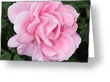 Pink Rose Square Greeting Card