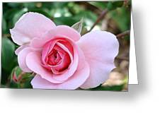 Pink Rose - Square Print Greeting Card