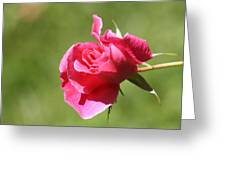 Pink Rose Vintage Greeting Card