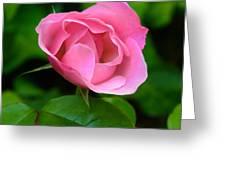 Pink Rose Volunteer Greeting Card