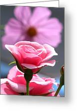 Pink Rose With Cosmo Greeting Card
