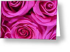 Pink Roses 2 Greeting Card