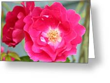 Pink Roses Greeting Card by Cathie Tyler