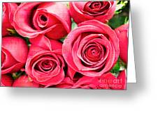 Pink Roses Flowers  Greeting Card