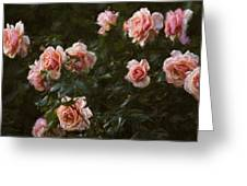 Flowers - Pink Roses Greeting Card