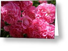 Pink Roses In Sunlight Greeting Card