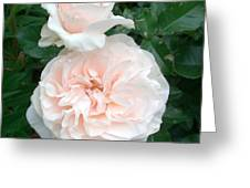 Pink Roses Love And Passion Greeting Card