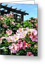 Pink Roses Near Trellis Greeting Card