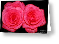 Pink Roses With Colored Edges Effects Greeting Card