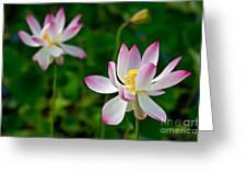 Pink Sacred Lotus Greeting Card