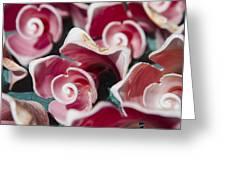 Pink Sea Shells On Cozumel Greeting Card
