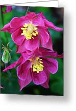 Pink Sensations Columbine Greeting Card