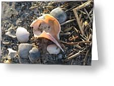 Pink Shell Bowl Greeting Card