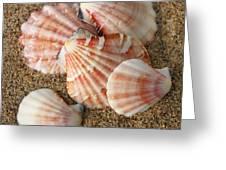 Pink Shells Greeting Card