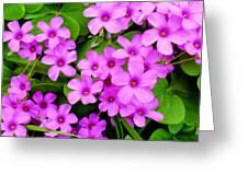 Pink Sorrel Greeting Card