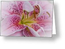 Pink Spotted Lily Greeting Card