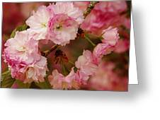 Pink Spring Blossoms Greeting Card