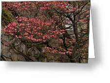 Pink Spring - Dogwood Filigree And Lace Greeting Card by Georgia Mizuleva