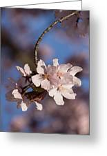 Pink Spring - Sunlit Blossoms And Blue Sky - Vertical Greeting Card