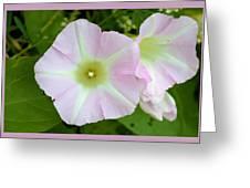 Pink Star 8706 Greeting Card