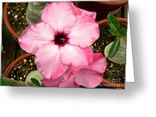 Pink Succulent Flower Greeting Card