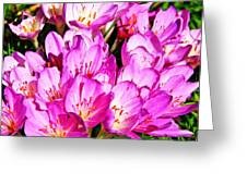 Pink Summer Blossoms Greeting Card