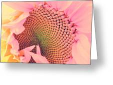 Pink Sunflower Greeting Card