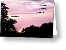 Pink Sunrise Geese Silhouette Greeting Card