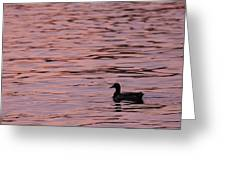 Pink Sunset With Duck In Silhouette Greeting Card by Marianne Campolongo