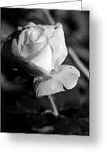 Pink Tea Rose 01 - Infrared Greeting Card