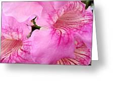 Pink Thunbergia Greeting Card