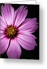 Pink Tickseed  Greeting Card