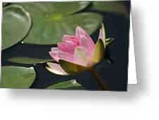 Pink Tilt... Greeting Card