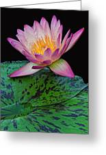 Pink Tipped Beauty Greeting Card