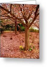 Pink Tones Greeting Card