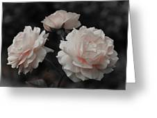 Pink Trio Greeting Card