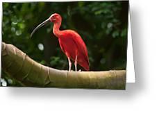 Pink Tropical Bird Greeting Card