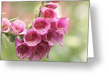 Pink Trumpet Greeting Card by Kim Hojnacki