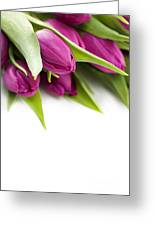 Pink Tulip Greeting Card by Boon Mee