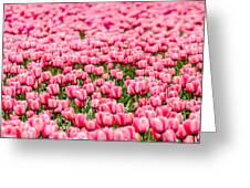 Pink Tulip Carpet  Greeting Card