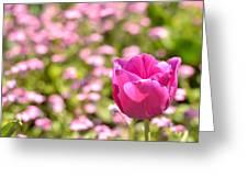 Pink Tulip Close-up Greeting Card