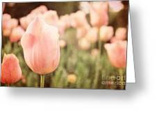 Pink Tulip Field Greeting Card