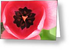 Pink Tulip Interior Greeting Card
