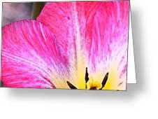 Pink Tulip Macro Greeting Card